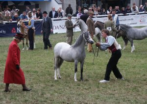 Artemisia's dam showing at Royal Welsh in yearling class.